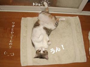 草の者な猫04