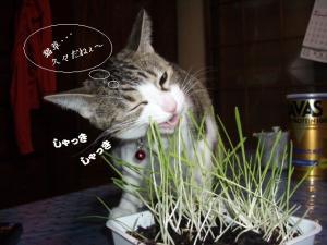 草の者な猫05