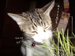 草の者な猫06