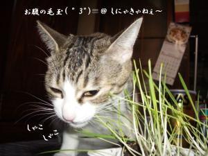 草の者な猫07