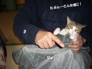 草の者な猫09