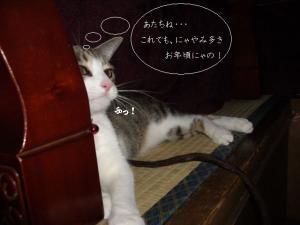 ぬくぬくな猫02