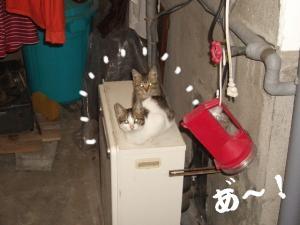 ぬくぬくな猫07