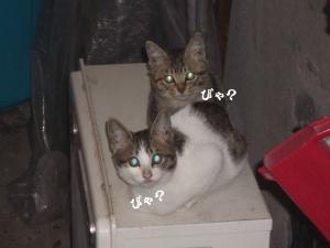 ぬくぬくな猫08