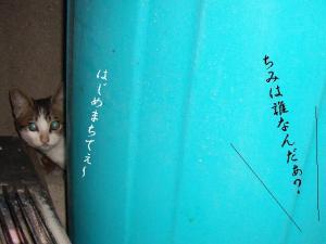 篭盛り猫01