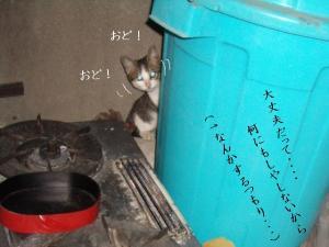 篭盛り猫02