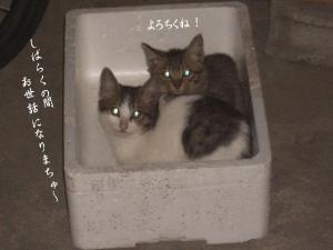 篭盛り猫04