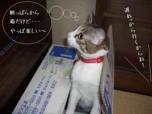 やっぱ箱が好き06