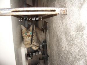 篭盛り猫06