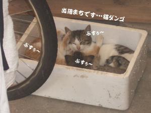 篭盛り猫08