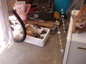 篭盛り猫09
