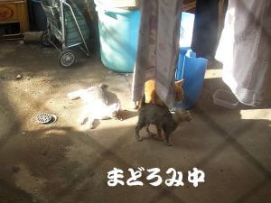 篭盛り猫10