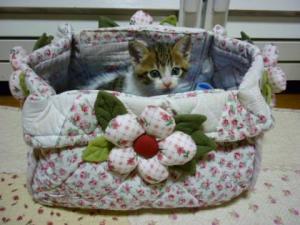 篭盛り猫11