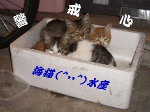 猫団子01