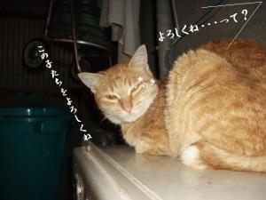 猫団子02