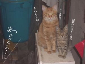猫団子03