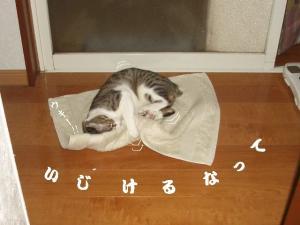 猫団子04