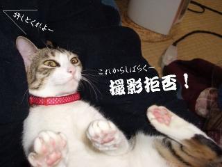 猫踏んだ02