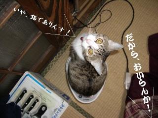 ポット猫04