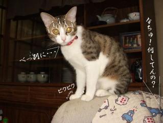 ポット猫06