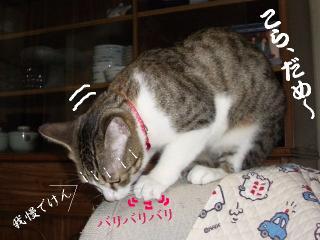 ポット猫07