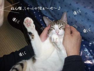 開放猫02