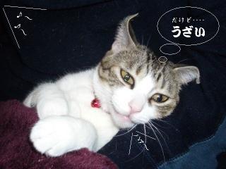 開放猫04