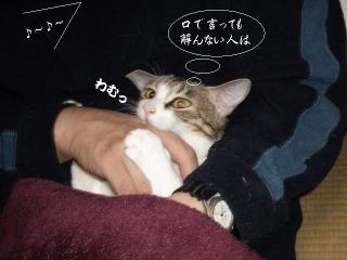 開放猫05