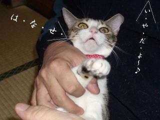 開放猫.07