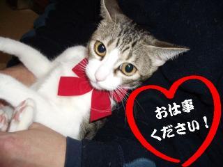 六本木純情02