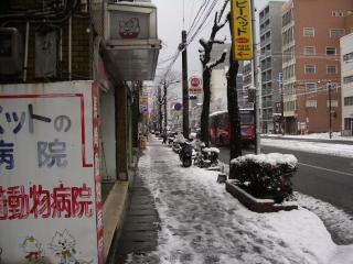 大雪こんこ02