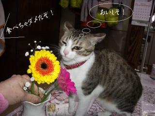 花と猫01