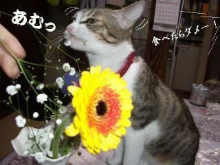 花と猫03