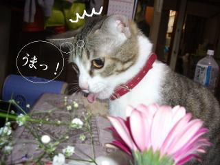 花と猫04