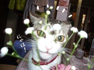 花と猫05