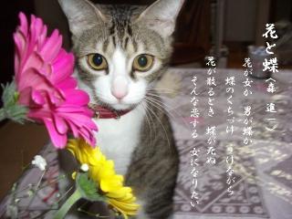 花と猫06