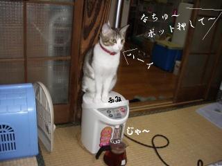 ポット猫01
