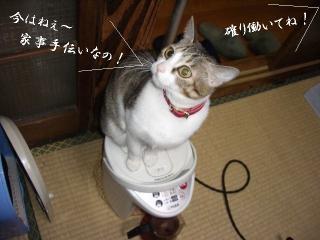 ポット猫02