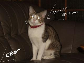 ポット猫03