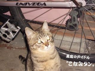こなみタン01