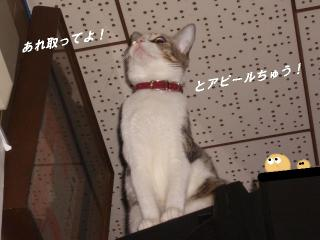 アピールな女01
