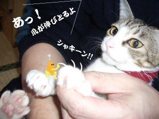 萌えな女04