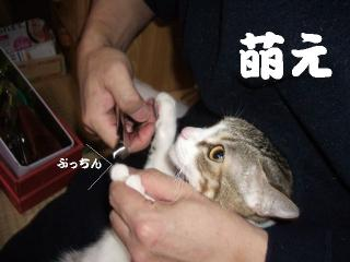 萌えな女06