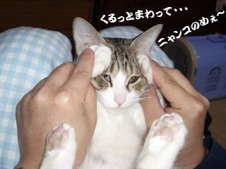ドラミな女04