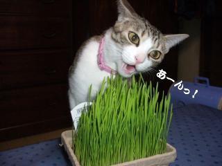 草の女01