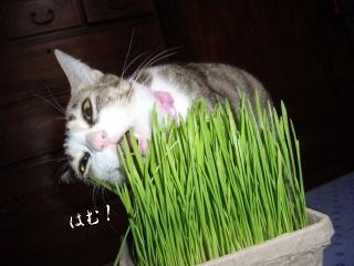 草の女02