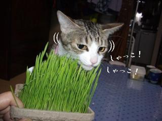 草の女03