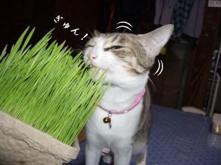 草の女04