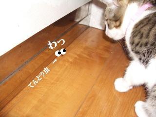 マルな女05