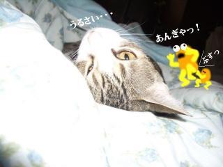 夏布団な女02